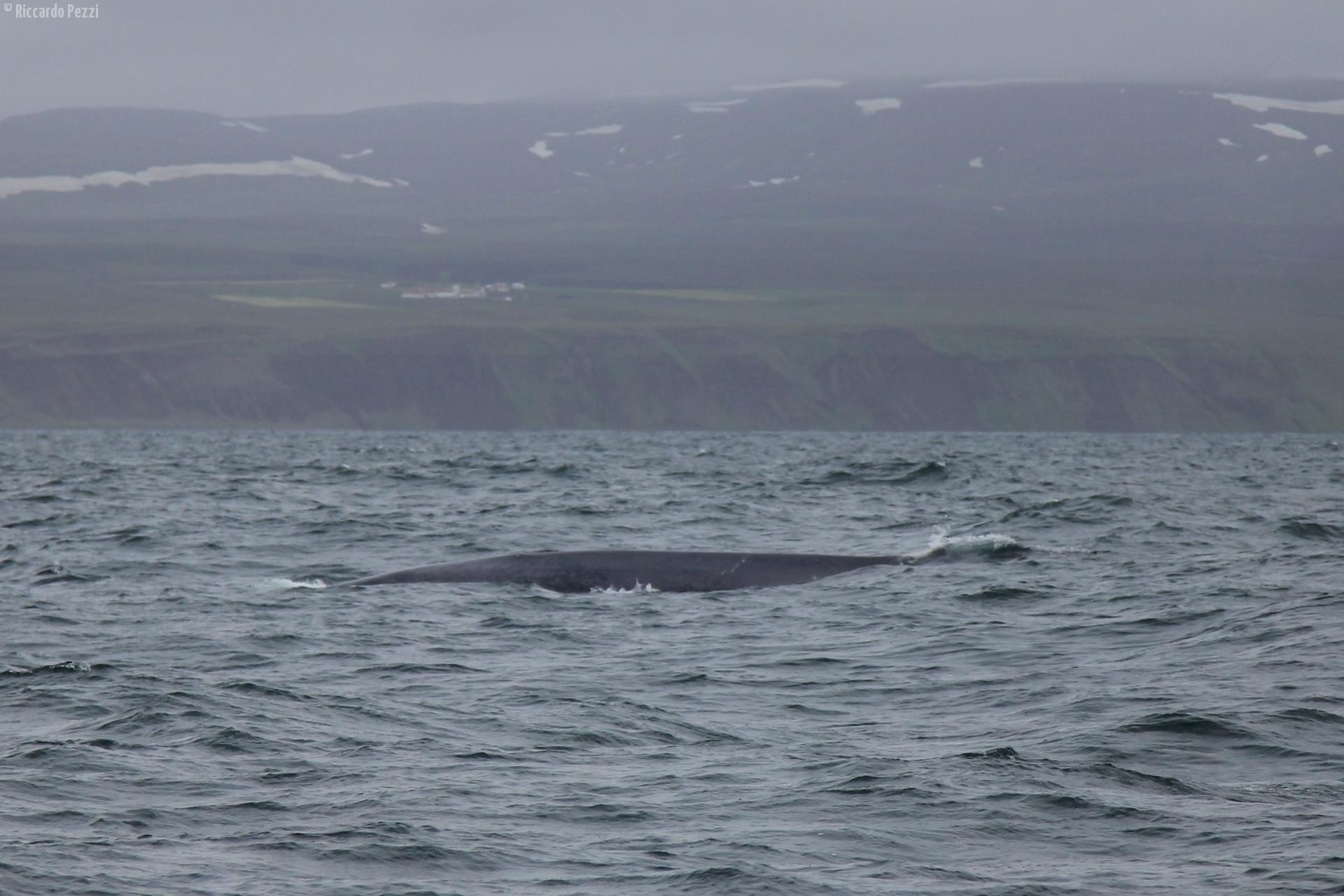 balena3